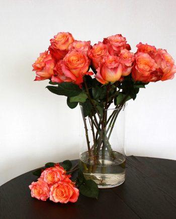 Orange Rose Free Spirit