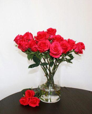 Pinke Rose Gotcha