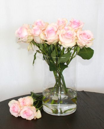 Rosa Rose Nena