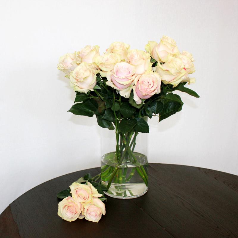 Rosa Rose Pink Mondial