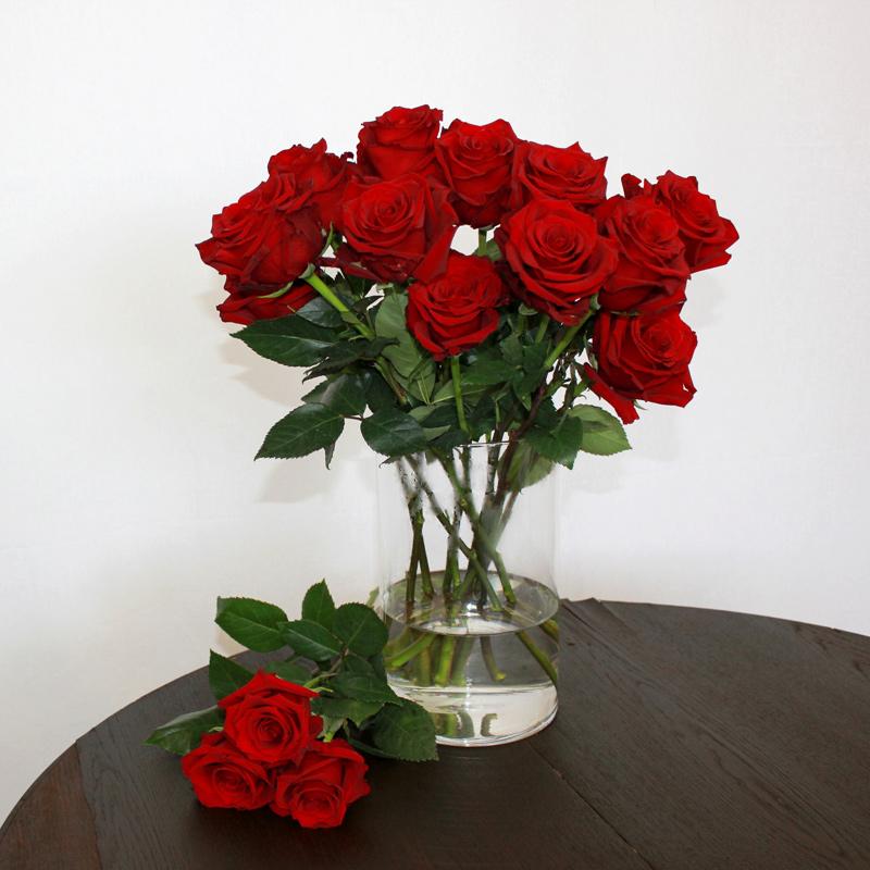 Rote Rose Explorer