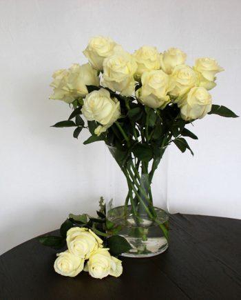 Weisse Rose Proud