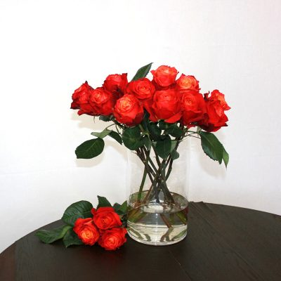 Zweifarbige Rose Atomic