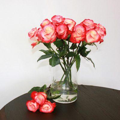 Zweifarbige Rose Cabaret