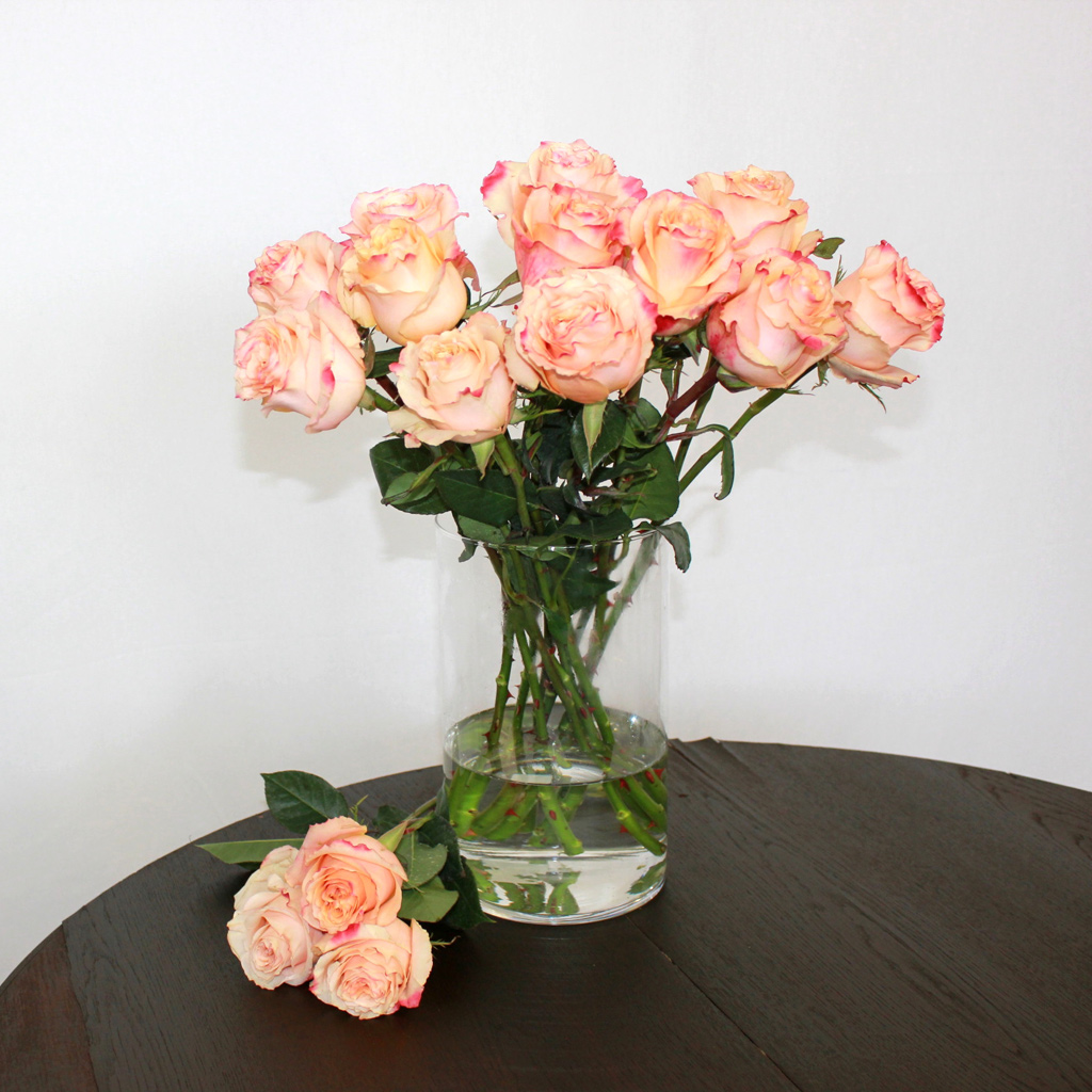 Zweifarbige Rose Carpe Diem