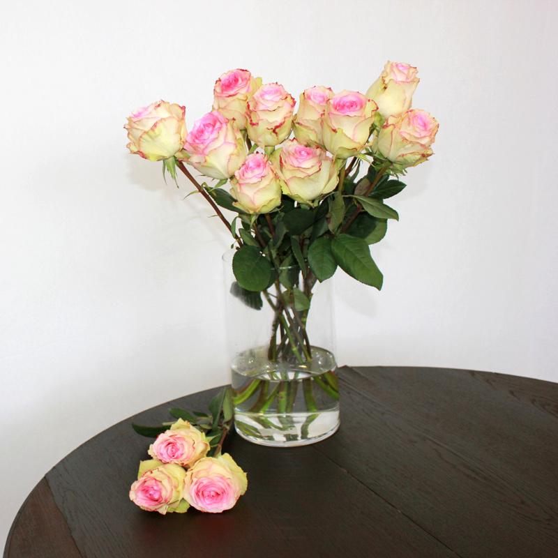 Zweifarbige Rose Esperance
