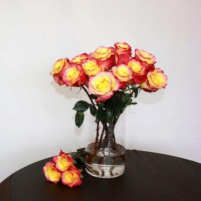 Zweifarbige Rose Hot Merengue