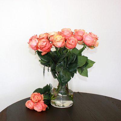 Zweifarbige Rose Kahala