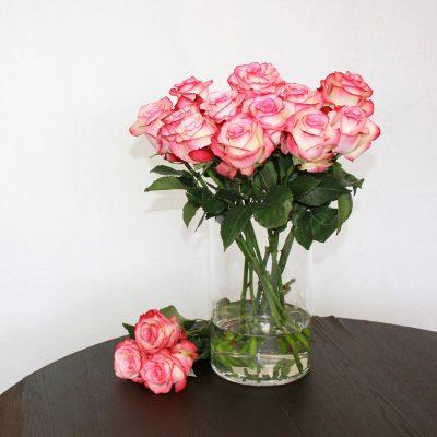 Zweifarbige Rose Paloma