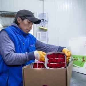 Ökonomisch nachhaltig - Wiederverwendung der Transportboxen - bestellen bei LIEBLINGSROSEN