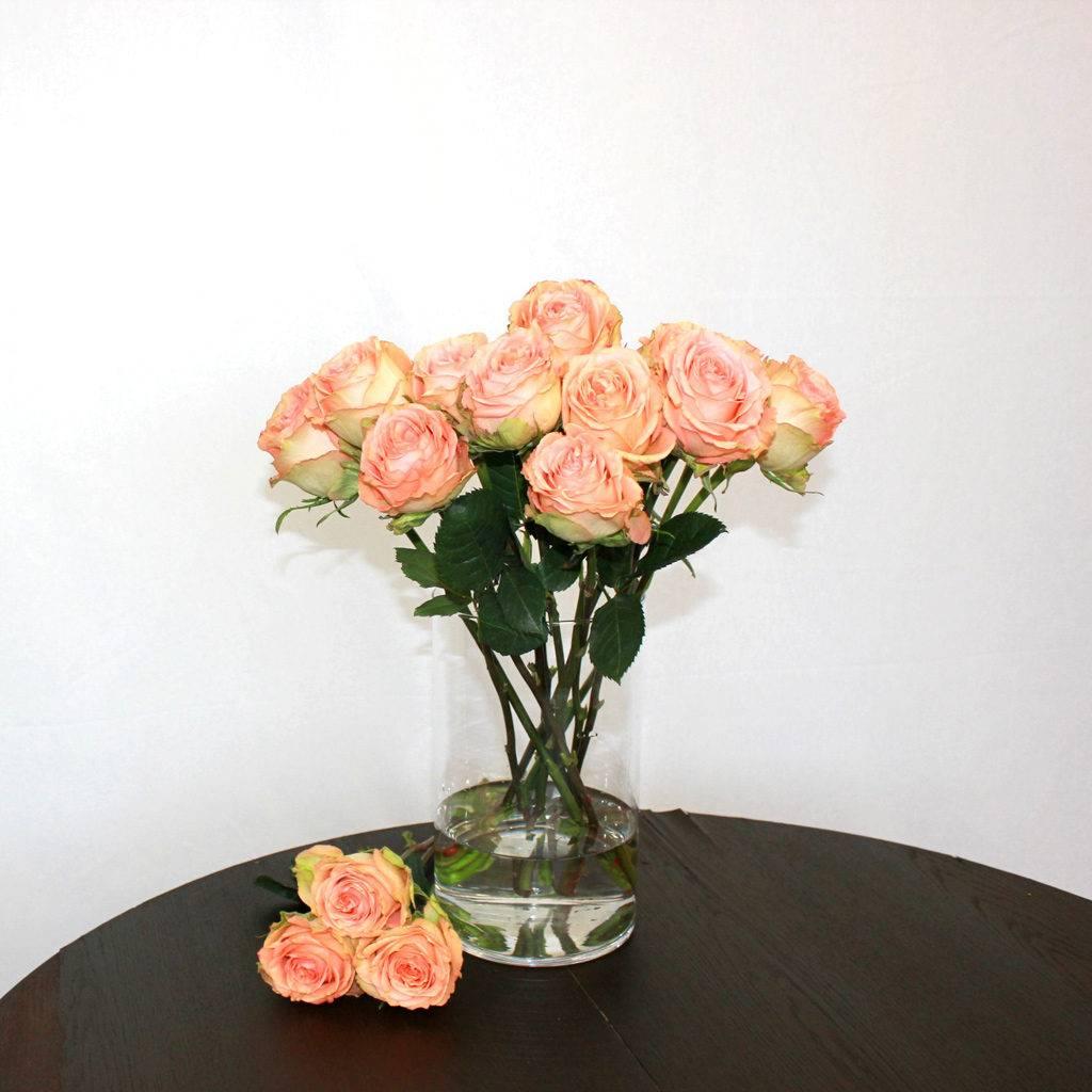 Lachsfarbene Rose Country Home - Jetzt bestellen bei Lieblingsrosen.com