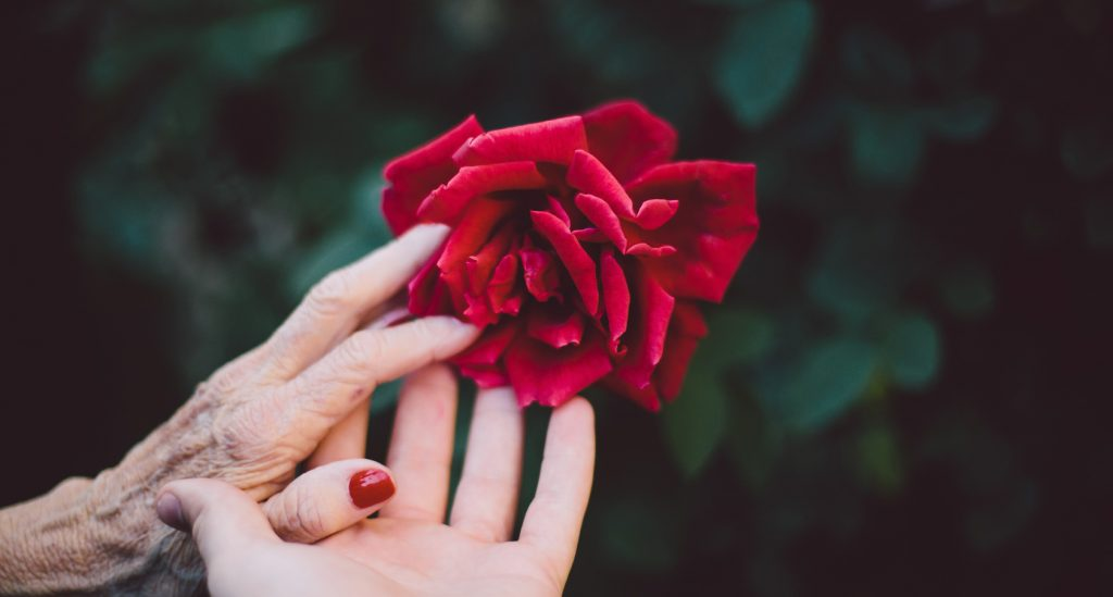 Rosen zum Muttertag bestellen bei Lieblingsrosen.com