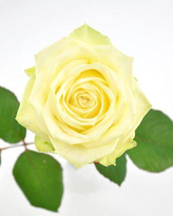 Produktbild White Naomi 1
