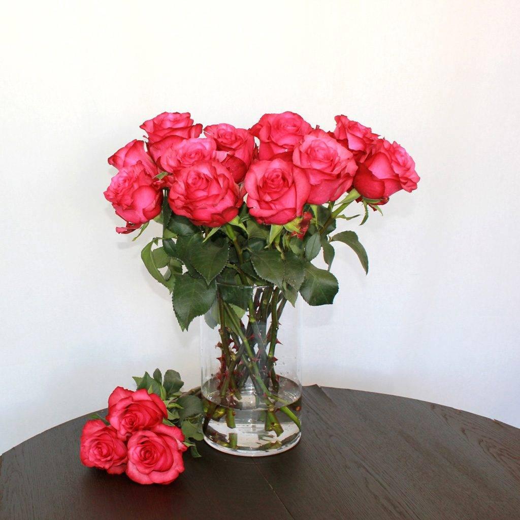 Pinke Rose Lola - Jetzt bestellen bei Lieblingsrosen.com