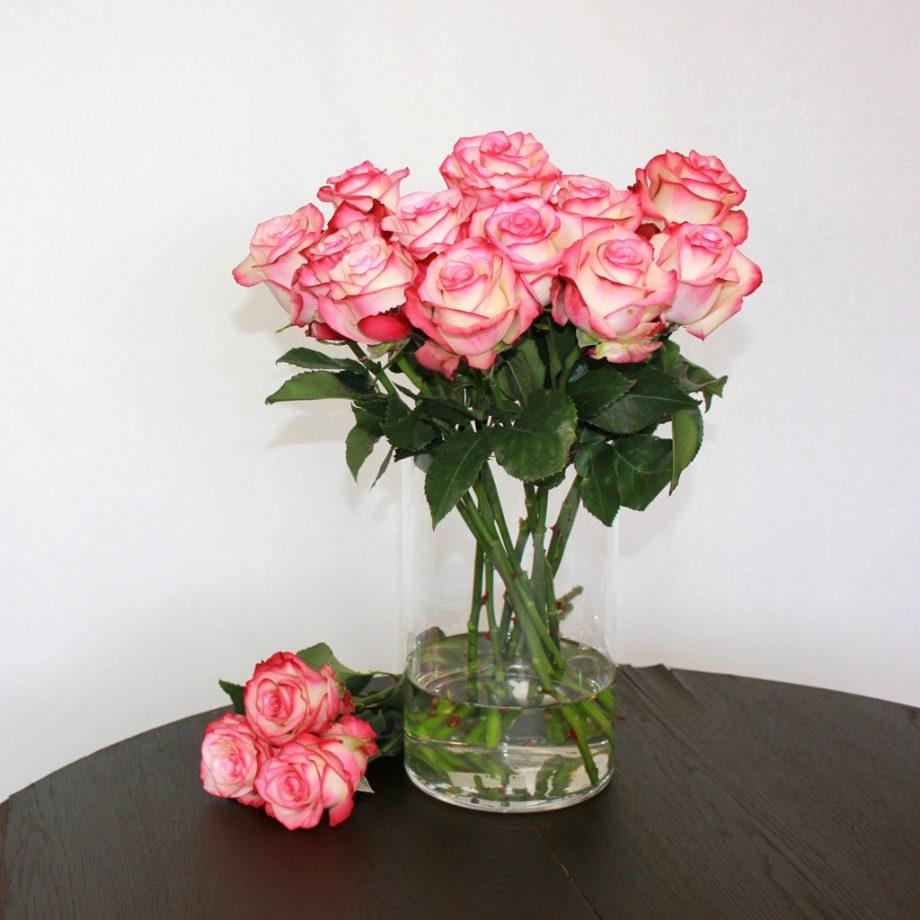 Zweifarbige Rose Paloma - Jetzt bestellen bei Lieblingsrosen.com